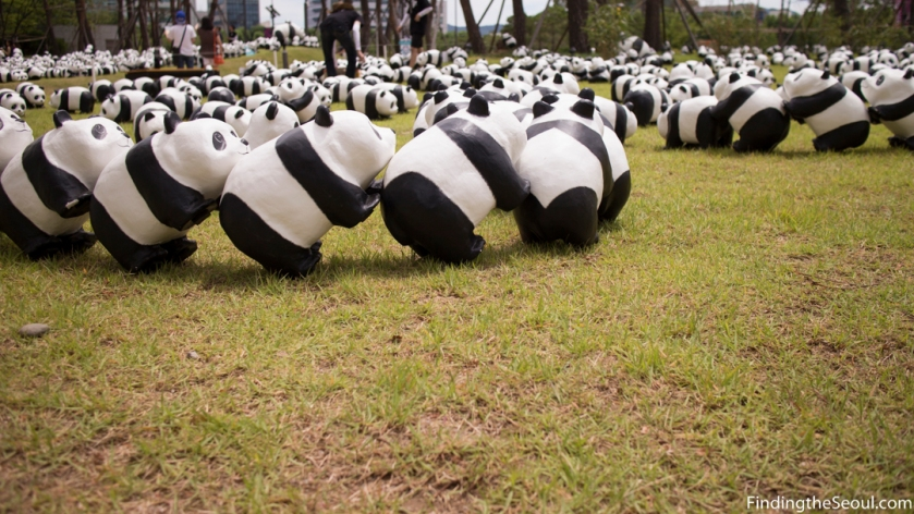 Panda 1600 Exhibit-7
